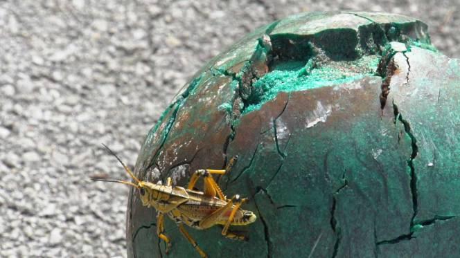 10-C0024T01-grasshopper