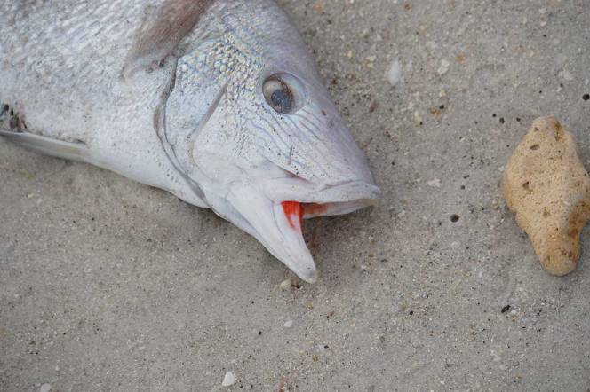 DSC06918-fish