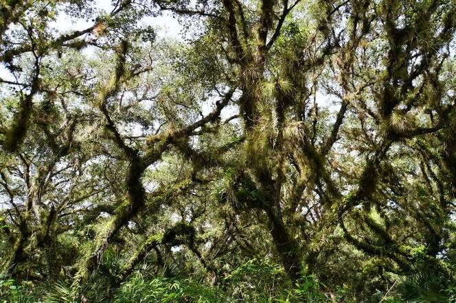 DSC07087-monkey-forest