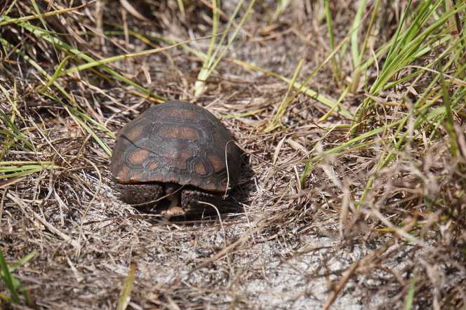 DSC07329-cu-tortoise