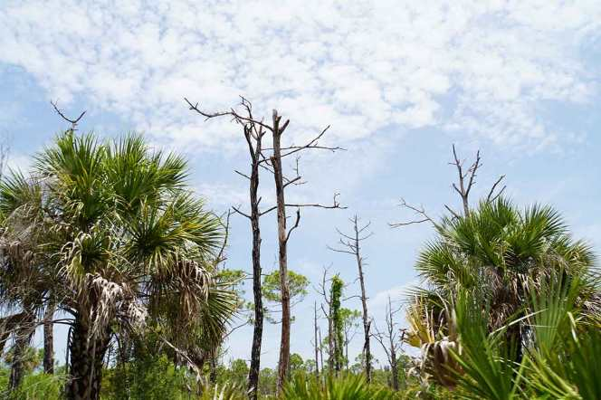 DSC07442-excel-trees-sky
