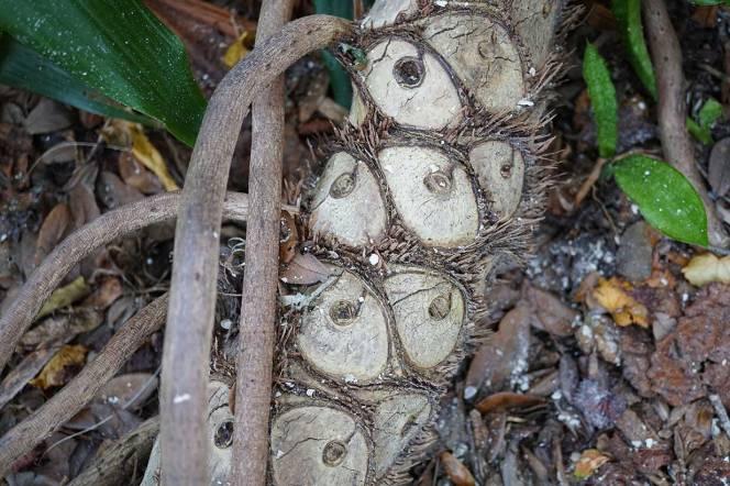 11-DSC02229-eye-tree