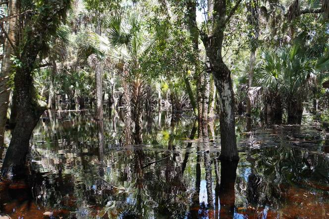 16-DSC01772-long-distance-view-water-trees