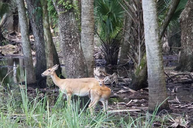 20-DSC01792-nice-2-deer