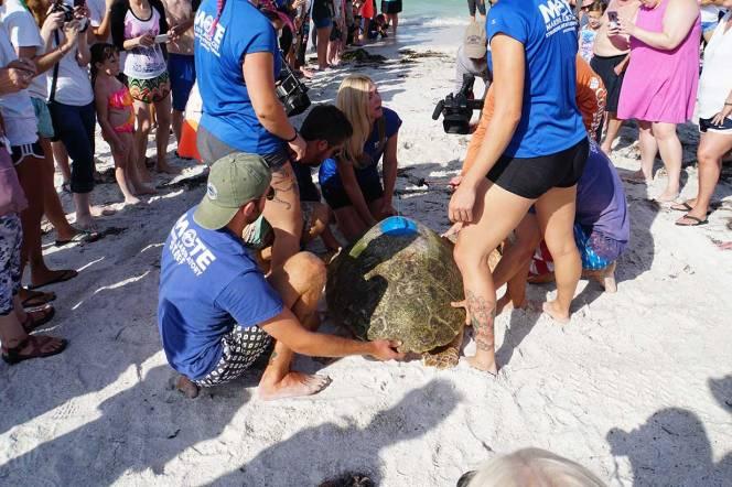 4-DSC00524-focus-good-turtle-on-sand