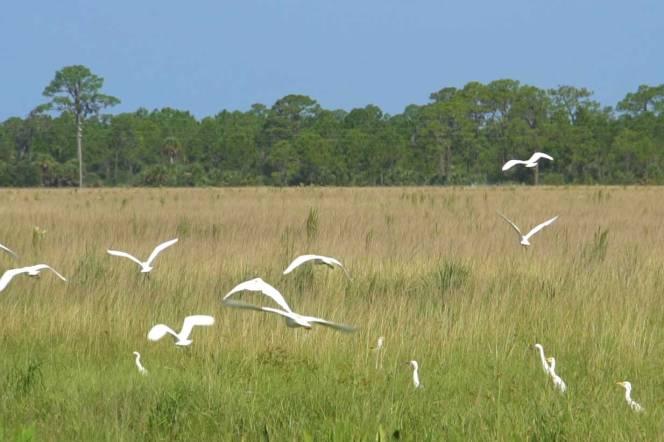 5-birds-landfill