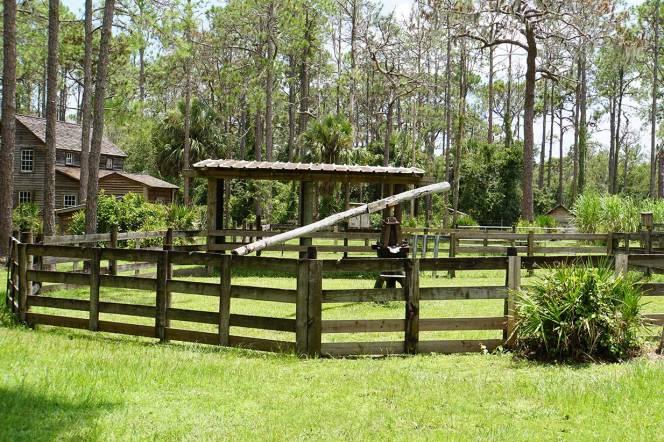 5-DSC02498-sugarcane-press