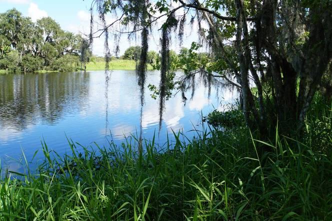 7-DSC01597-grass-river-overhang