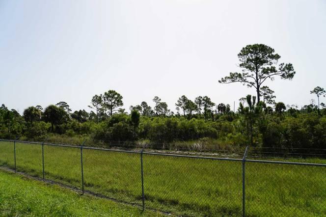 7-DSC01890-left-fence-pine