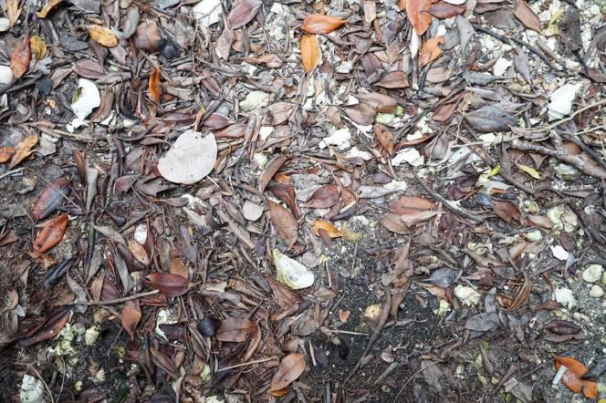 DSC01011-leaves-ground