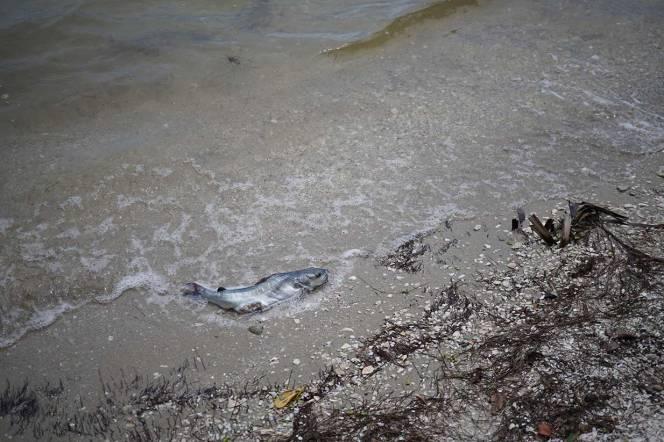 DSC01019-dead-fish-beach