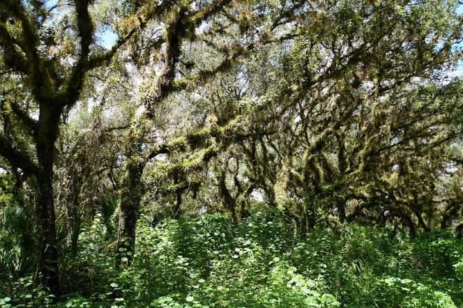 DSC01340-many-trees
