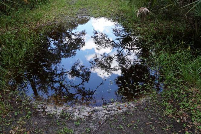 DSC01395-puddle-reflection