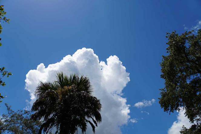 DSC01410-palm-cloud-blue-sky
