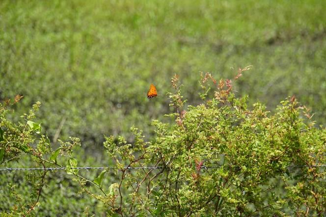 DSC01649-nice-butterfly-fence