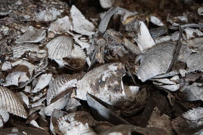 DSC02085-cu-shells