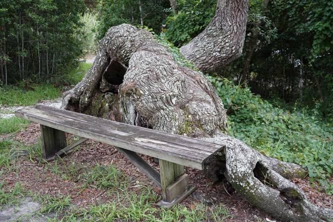 DSC02189-snarl-tree